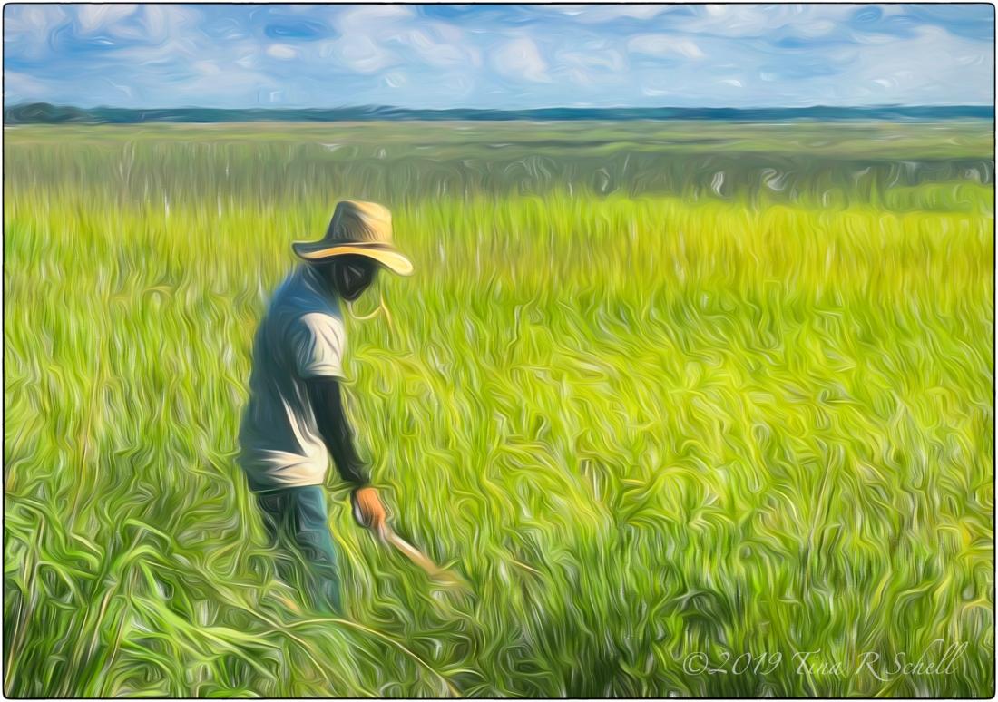 WORKMAN GROOMING MARSH GRASSES