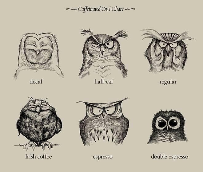 caf owl
